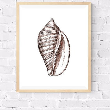 Sea Shell Printable, Voluta Vexillum Decorative art, Sea life print, Marine Art, Beach House decor, Lobster Poster, Modern Art, 8x10, 24x30