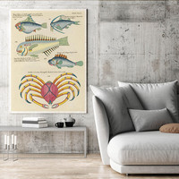 Fish Poster| Sea Life Art| Taxonomy Wall Art| Fishes Wall Art| Fishes Print| Animal Poster| Natural History| Crabs Wall Art Print| HAP006