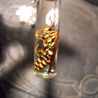Yellow Wasp Wet Specimen Necklace Preserved in Vial