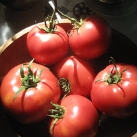 20 organic seeds Rose tomato Bern, Lycopersicum esculentum L., make the difference in your vegetable garden, surprise your guests