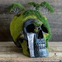 SPRING BONSAI MOUNTAIN SKULL <BR>Free worldwide shipping <br>(USD)