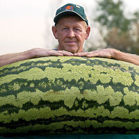 20 World's Largest Giant Watermelon Rare Fruit Seeds- HUGE 200 lbs,Sweet & Extra Juicy, Home Gardening Outdoor Plants Interesting
