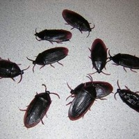 1 Dozen Fake Roaches Prank Novelty Cockroach Bugs Look Real