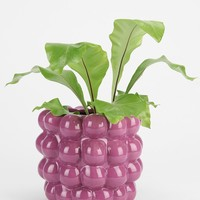 Plum & Bow Blackberry Planter - Urban Outfitters