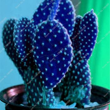SALE! 1Pack = 50 Pcs Exotic Cactus Seeds Rare Mini Bonsai Flower Seeds Import Succulent Seeds Natural Growth Best Home Desk Gift