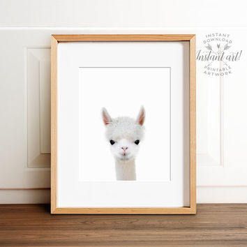 Farm animal prints, Baby alpaca print, PRINTABLE art, Nursery decor, Nursery wall art, Baby animal prints, Animal nursery art, Alpaca photo