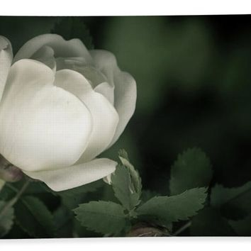 White Flower Of A Dogrose Beach Towel