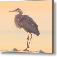 Evening Heron - Colorful Pastel Canvas Print