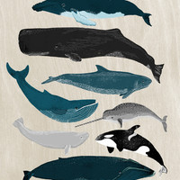 Whales - Pod of Whales Print by Andrea Lauren Art Print by Andrea Lauren Design