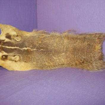 real badger face head leather fur hide animal tanned taxidermy skin crafts art part piece