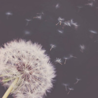Dandelion Photograph - Summer Photography - Conceptual Photography - Fine Art Photography - Modern Wall Art - Home Decor