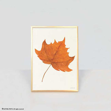 Maple leaf print-leaf print-watercolor orange maple leaf print-fall print-autumn print-botanical print-home decor-autumn-NATURA PICTA-NPWP14
