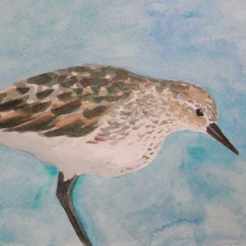 Watercolor Painting Bird Art Sandpiper by maryrichmonddesign