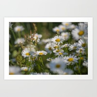 Daisies meadow in the summer Art Print by tanjariedel
