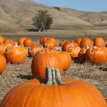 Pumpkin Field Photo Greeting Card, Fine Art Photography, Autumn Notecard, Fall Landscape, Northern California, All Occasion Card, Fall Color
