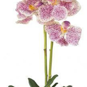 Vanda w-Glass Vase Silk Flower Arrangement