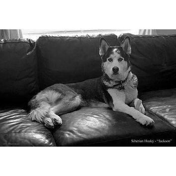 Dogs Siberian Husky poster Metal Sign Wall Art 8in x 12in Black and White