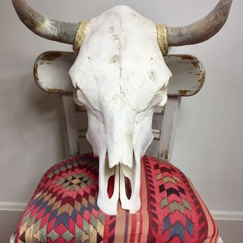Genuine Taxidermy Cow Skull