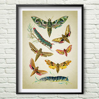 Get 3 Colors Background Butterflies Art Print, Вutterflies art, wall art, living room, bedroom, housewarming gift, colorful, insects *92.2*