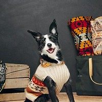Perika Womens Fairisle Dog Sweater - Brown, L