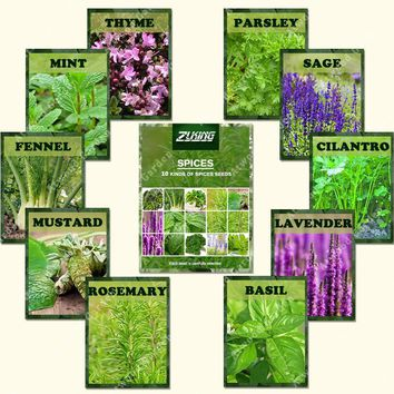 1100 Spice Combo Mix - Flower Seeds Herb Vegetable Seed 100% Organic Non GMO