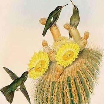 Hummingbirds (Fine Art Giclee)