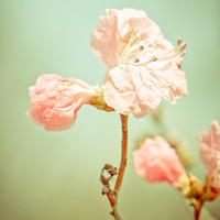 Aprils' Pink blossom Art Print by Wood-n-Images   Society6