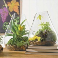 Recycled Glass Terrarium - VivaTerra