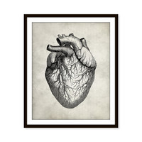 Vintage Anatomy Heart Art Print, Human Anatomy 5x7, 8X10, 11x14 Medical Scientific Science Teacher Gift, Doctor Wall Decor