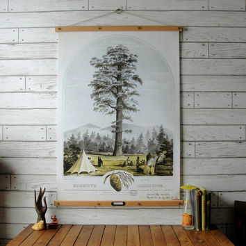Big Tree Botanical Chart / Vintage Reproduction / Canvas or Paper Print / Oak Wood Hangers with Brass Hardware / Organic Wood Finish