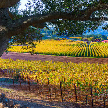 California Nature Print, Napa Valley Fall Photo, Wine Country, Wine Valley Canvas, Vineyard Photo, Gallery Wrap, Winery, Large Wall Decor