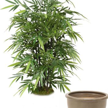 5' Black Bamboo Tree In Brown Stoneware Pot