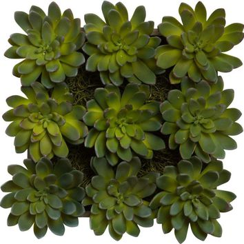 Succulent In Wall Hanging Box