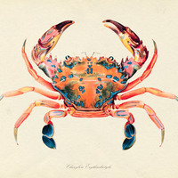 Antique Crab Plate 1 1903  Natural History Art by BelleMerGraphics