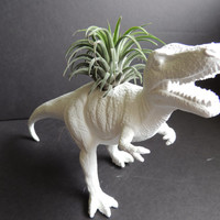 All items - Buy 3 get 1 free. T Rex dinosaur planter in bright white. Includes air plant.