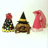 Tortoise Costume, Pet Costume, Princess, Witch, Clown Costume, Turtle Costume