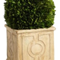 Zodax Cinzia Topiary Decoration | Nordstrom