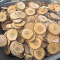 "200 Solid OAK round wood slices ranging from 2"" to 2.5"" diameter cut at 1/4"" thick"
