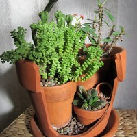 Upcycled Broken Pot Cactus/ Succulent Garden by SalvagedNature