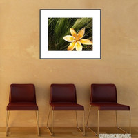 Lily on the Green - Stargazer Lily Fine Art Photography Print - White Orange Yellow