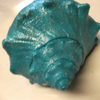 Turquoise Conch Seashell Reiki Alters Higher Heart or Throat Chakra Natural Whelk Seashell Healing