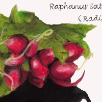 Print of Radish drawing - Pastel Painting - Kitchen Decor - Still Life