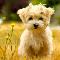Custom Unique Gift Pet Oil Painting Pet Lover Wall Art  Dog Puppy Photo Canvas 16x20