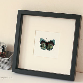 Real Framed Charles Darwin Butterfly Display FREE SHIPPING 1046