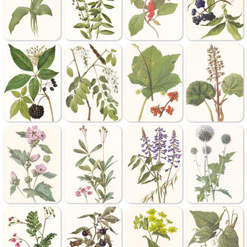 Plants, Herbs, Bestiary. Drawings by Shipilenko. Set of 16 Vintage 8''x6'' Prints -- 1987. Fine Arts Publ., Moscow