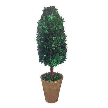"""25"""" Tall Preserved Natural Boxwood with Clay pot (8x12x25"""")"""