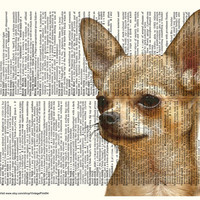 CHIHUAHUA PHOTO Chihuahua Art Dictionary Art Print Vintage Upcycle Book Page Chihuahua Home Decor Chihuahua Wall Decor Chihuahua Picture Dog