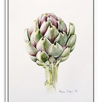 Alison Cooper, Artichoke Study, Paintings