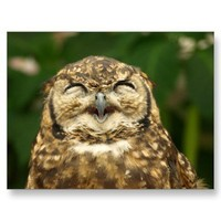 owl's smile!! :) postcards from Zazzle.com