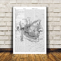 Head anatomy poster Gothic decor Medical print Macabre art RTA265